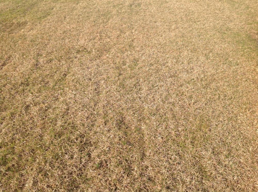 Запущенный газон