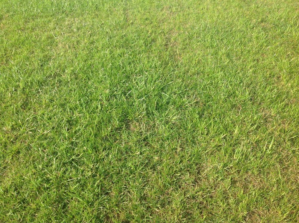 Восстановленный газон